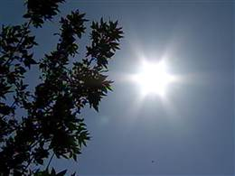 Heat wave are coming this summer 100s everywhere especially in the mid west be prepare drink plenty of water crank up the AC in the morning secure windows and door close curtent keep it dark so the cold air remain longer eat some ice scream to cool off but not too much sugar