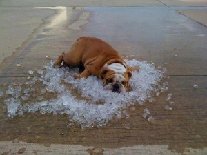 Dog surviving heat wave July 2012 and it's only the beginning how to survive heatwave outside the home