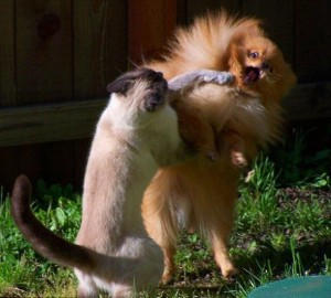 real kung fu cat smack mixed martial art bully dog funny picture of the day you have to real laugh