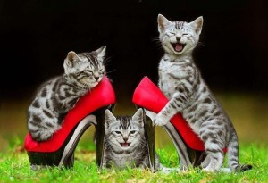 cats smiling laughing having fun 3 of them with red high heel