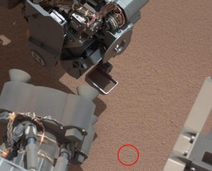 mars rover found dead plant or shredded animal skin lying on the sand? no false alarm it was just the rover skin peeling off LOL