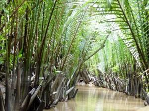 vuong dua nuoc cu lao tan thoi vietnam tan phu dong water coconut creek