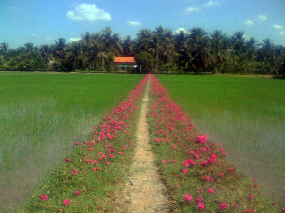 my house in cu lao tan thoi tan phu dong go cong tien giang vietnam