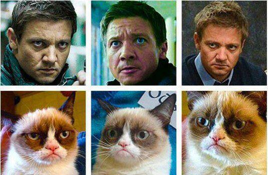 Human facial express compare to cats vs versus cat facial express celebrities pretty funny happy Friday
