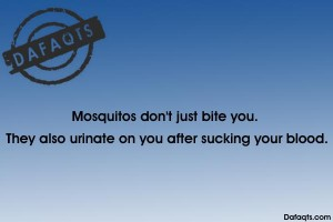 mosquitos don't just bite you they also urinate on you after sucking your blood