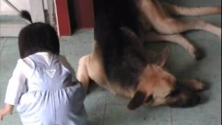 little girl trick a dog friendly with it then when dog not paying attention she stomp on the dog's leg very funny cute
