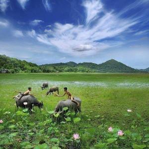 Vietnam country side farm land children and water buffalo hot summer sun