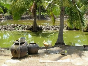 the place where I grew Vietnam country side most home backyard view