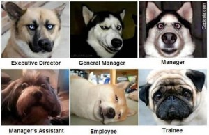 Can you figure out the company org chart level funny