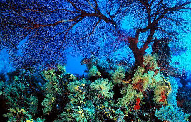 beautiful nature undersea image not photoshop just science