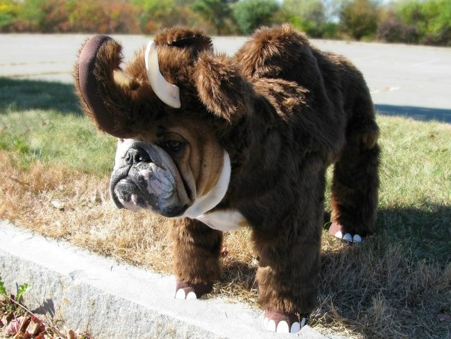 Halloween costumes for everyone even animal how about a dog?