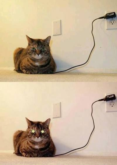How do you know when the cat is fully charged?