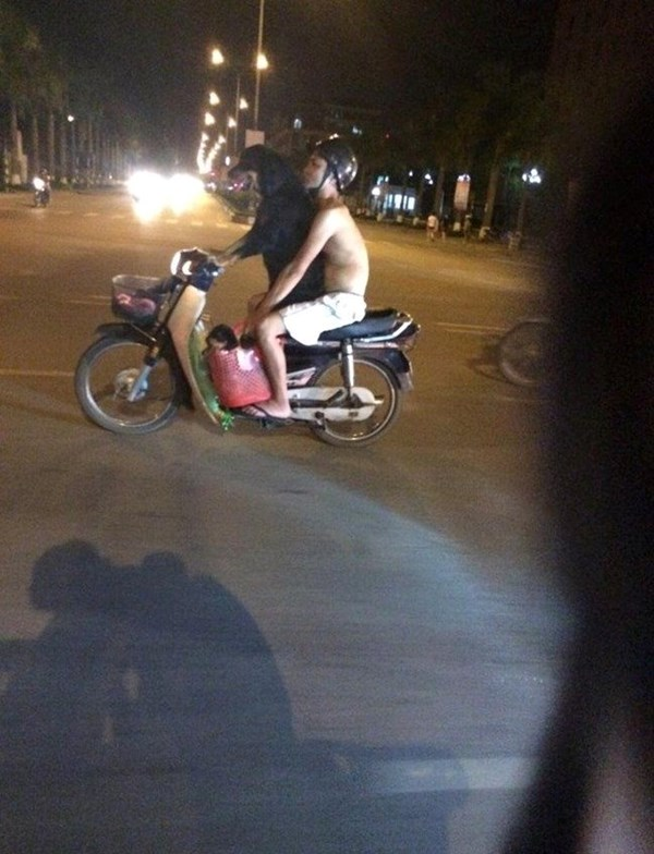 black dog riding motorcycle in Vietnam street captured on camera
