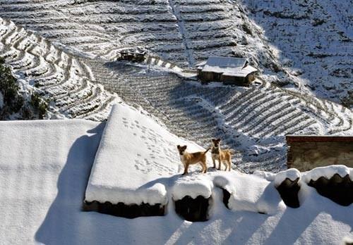 Sapa mùa tuyết trắng - Sapa Vietnam Winter snow yes Christmas 2014